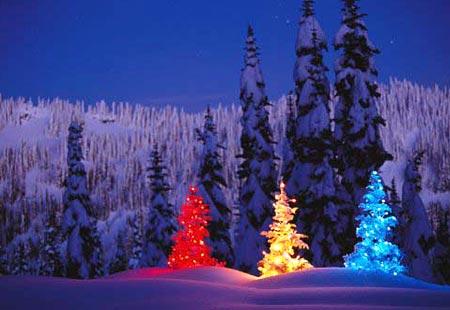 005 Christmas trees