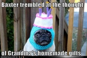 normal_funny-dog-pictures-baxter-trembled-at-the-thought-of-grandmas-homemade-gifts
