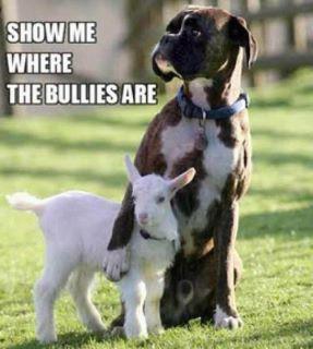 Show me the Bullies!