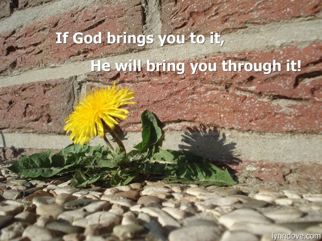 if-god-brings-you-to-it
