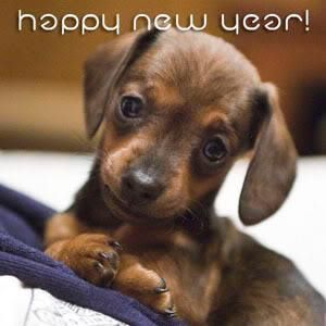 New-year-puppy