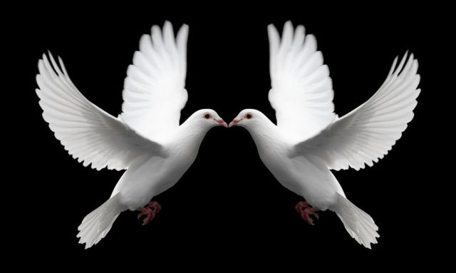 Pair_of_White_Doves_Symbolize_Love