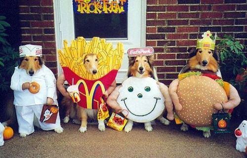animal-costumes-29