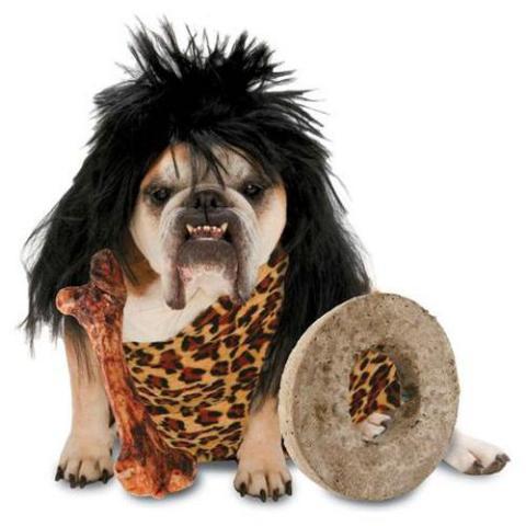 animals in costume