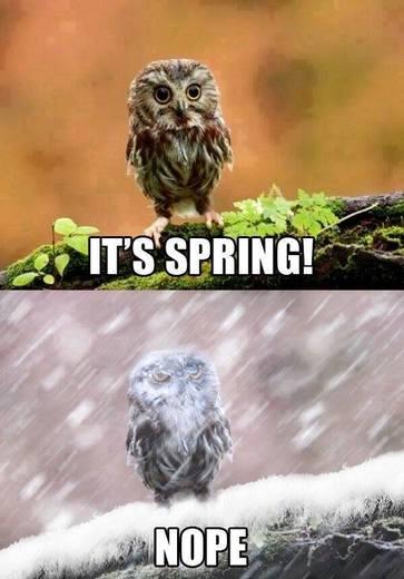 Spring in Alberta
